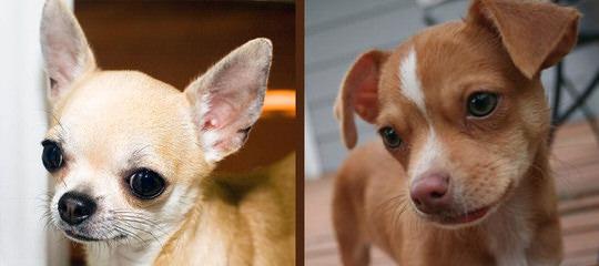 Motley Kennels - Dog Breeders