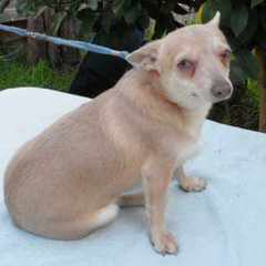 Terra Atlantis FCI - Dog Breeders