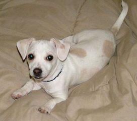 Umpqua Valley Kennels LLC - Dog Breeders