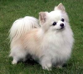 FAIRYTAILPUPPIES - Dog Breeders