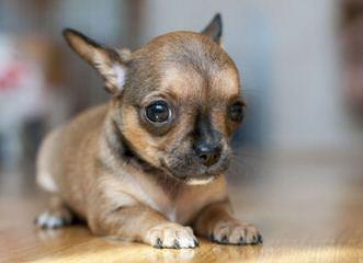 Samerey Kennel - Dog Breeders