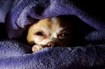 Ron Del Kennels - Dog Breeders