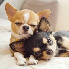 LILBIT - Dog Breeders