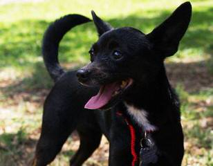 Elohimsapples - Dog Breeders