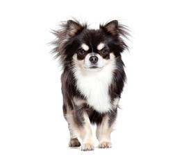 Munas Toys - Dog Breeders