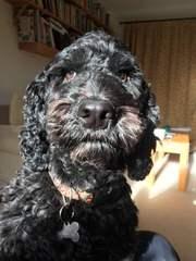 Robins Pups & Behavior Specialist of FL - Dog Breeders