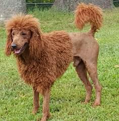 Shannon's Shamrock Kennels - Dog Breeders