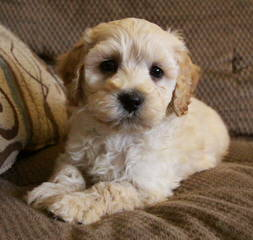 Playful Pups For You - Dog Breeders