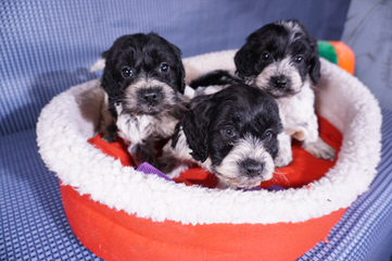 Pups-N-Stuff - Dog Breeders