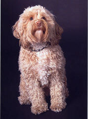 Wildwood Acres - Dog Breeders