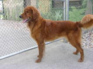 Butler Puppies - Dog Breeders