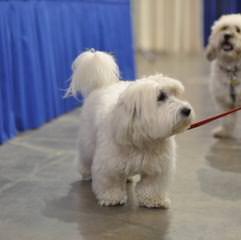MyLittlePuppyPaws - Dog Breeders