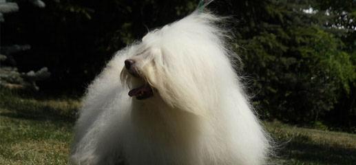 TiaCotons - Dog Breeders