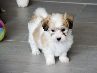 MyLittlePuppyPaws - Dog and Puppy Pictures