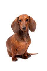 Hubbard Kennel - Dog Breeders
