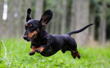 Von Glasenhardt kennel - Dog Breeders