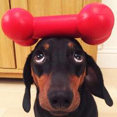 Micsplace Dachshunds - Dog Breeders