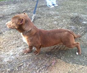 TJTeckelmania - Dog Breeders