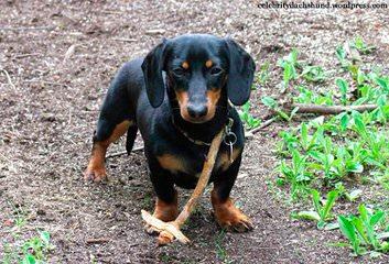 Pleasant Valley Farms - Dog Breeders
