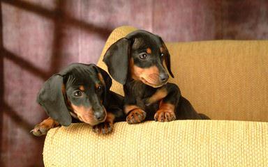 Thomas Nesbitt - Dog Breeders