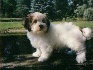Maryjo S - Dog Breeders