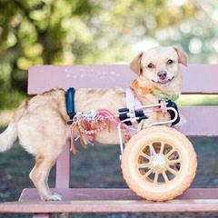 Timbercreek Puppies Daisy Dog - Dog Breeders