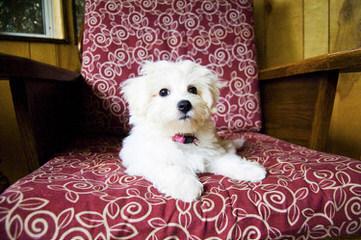 Daisy Puppies - Dog Breeders
