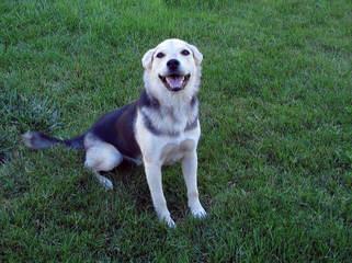 parkus kennels - Dog Breeders