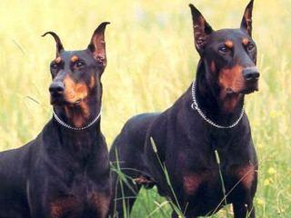 Di Casa MonteNegro kennel - Dog Breeders