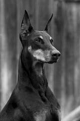 Jupiter Collies - Dog Breeders