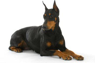 East Hills Kennels - Dog Breeders