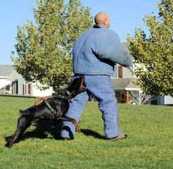 Doberman Von Ryans Luxus - Dog Breeders