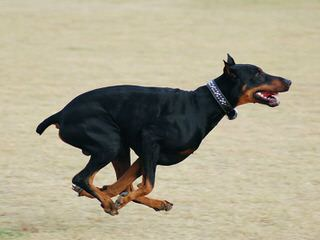 Hydobes By Global Cretaions - Dog Breeders