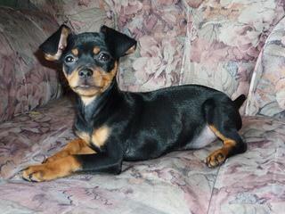 Shady Grove Kennel - Dog Breeders