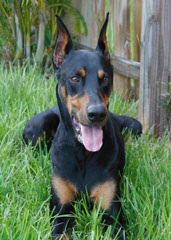 Fox Hollow kennels - Dog Breeders