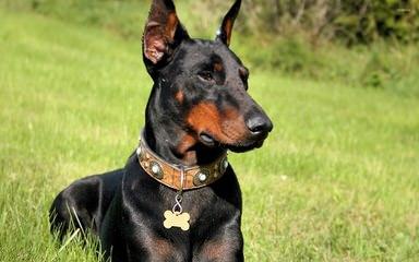 Puppy Love Kennels - Dog Breeders