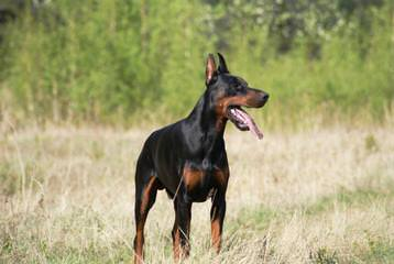Anderson Kennels - Dog Breeders
