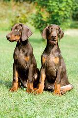 MOA - Dog Breeders