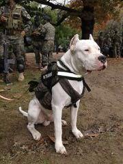 Élevage Dogue de la Rivière - Dog Breeders
