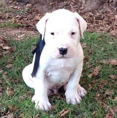 Elreydelaspampas - Dog Breeders