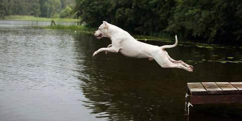 Lirio Blanco Dogos Argentinos - Dog Breeders