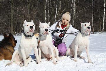De La Torrida Dogos - Dog Breeders