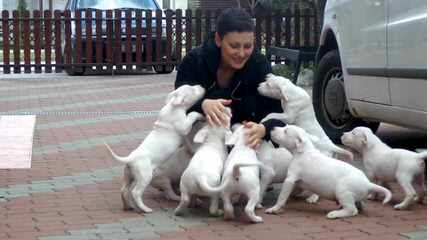 Pure Dogo - Dog Breeders