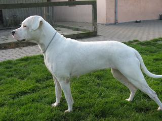 Dogo Valley-Valiente Dogo - Dog Breeders