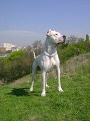 Sanagnes - Dog Breeders