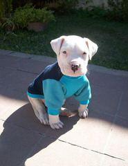 stonhamsdogos - Dog Breeders