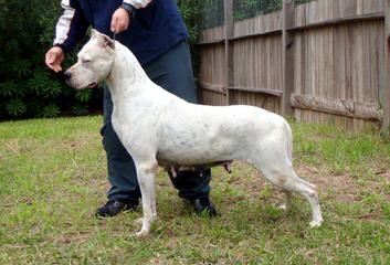 Élevage (Kennel) Igashu - Dog Breeders