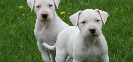 Altaniyin - Dog Breeders