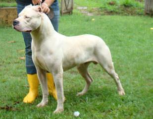 A La Historia Dogo - Dog Breeders
