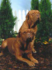 Heritage Bordeaux in Ohio - Dog Breeders